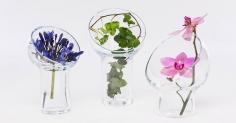 꽃을 둘러싼 유리 후드