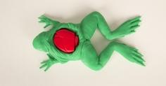 학습을 위한 개구리 해부키트