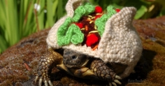 Crocheted Sweaters for Tortoises